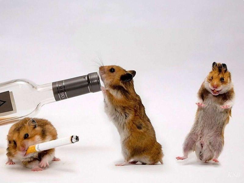 como matar o eliminar plaga de ratones en barcelona 2020